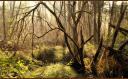 Vert et Noir : Pour une planète verte et libre ! Index du Forum